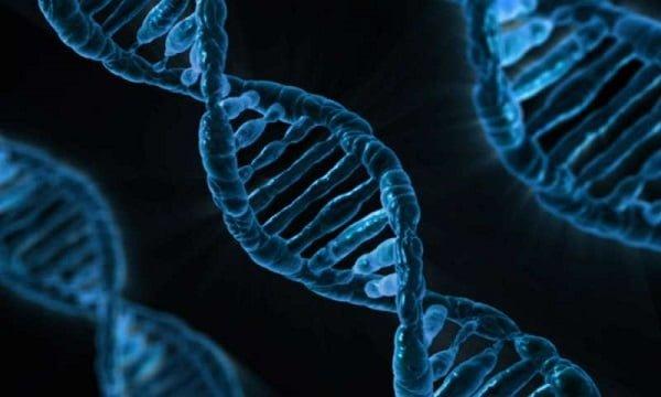 شناسایی ۱۵ ژن جدید که در شکل دادن چهره انسان دخیل هستند! - اخبار زیست فناوری