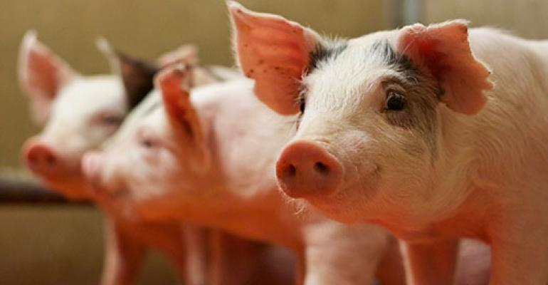 Copper hydroxychloride in diets fed to weanling pigs improves performance and health - اخبار زیست فن
