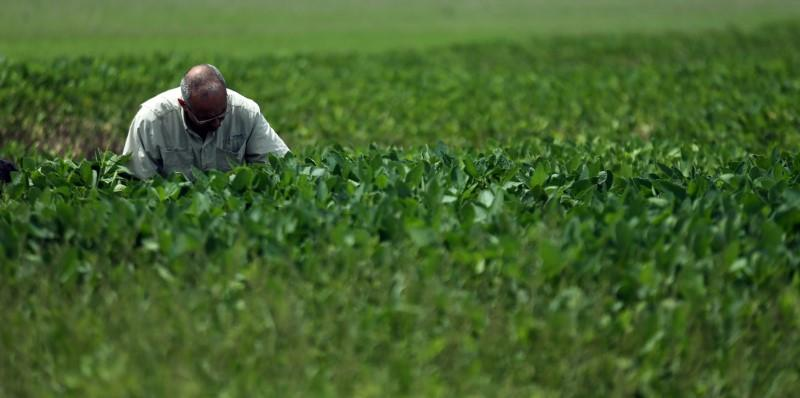 Exclusive Argentine farmers, seed companies strike royalties deal - اخبار زیست فن