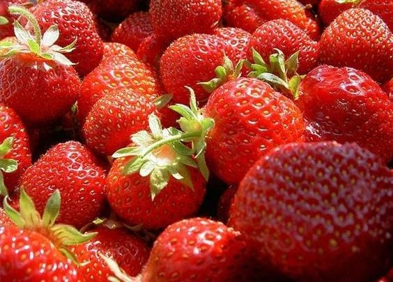 GENE THAT COULD MAKE MORE VIABLE EVER-BEARING STRAWBERRIES - اخبار زیست فن