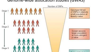 Photo of GWAS بیماری کم خونی با بدن لوویی را ژنوتیپ متفاوت نشان می دهد