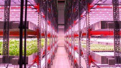 Photo of رشد مواد غذایی بدون خاک یا نور طبیعی