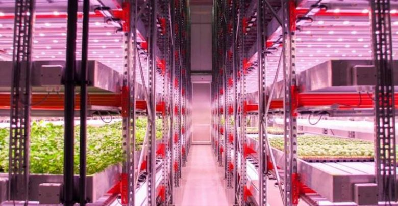 How urban farmers are learning to grow food without soil or natural light - اخبار زیست فن