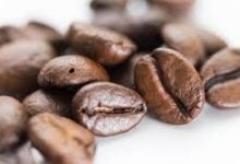 Low Genetic Diversity Afflicts Coffee And Dogs Genetic Engineering Could Help - اخبار زیست فن