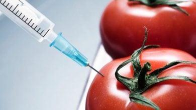 Photo of اصلاح ترکیبات ارتقا دهنده سلامتی در گوجه توسط ژن Mustard