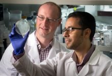 Photo of حافظه سلول های T مسئول ایمنی بلند مدت آموزش دیده اند