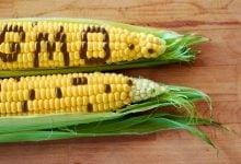 Photo of شناسایی ریشه های GMO توسط نامیبیا
