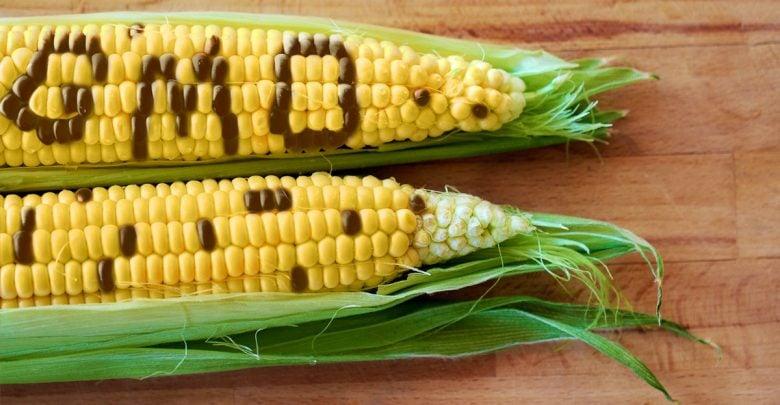 Namibia can now trace GMO origins - اخبار زیست فن