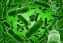Researchers use artificial intelligence to identify bacteria quickly and accurately