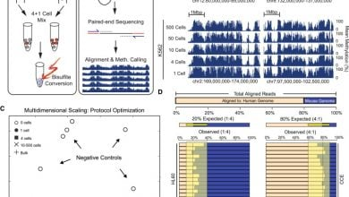 Photo of Single-Cell Methylome Sequencing Uncovers Dynamics of DNA Methylation in Human Embryos