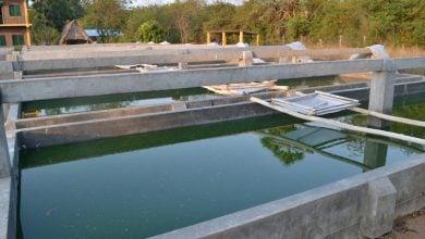 پروژه تولید جلبک از چشمه های آب گرم زمین گرمایی در یالوا - اخبار زیست فناوری