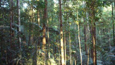 Photo of روش منحصر به فرد درختان گرمسیری برای مقاومت در برابر خشکسالی