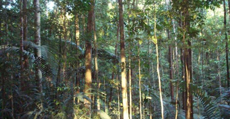 Tropical trees use unique method to resist drought - اخبار زیست فن
