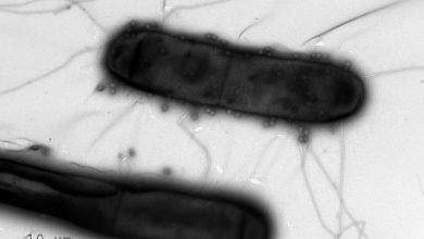 Photo of سیستم ایمنی باکتریایی