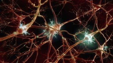 Photo of کشف مسیر جدید ژنتیکی برای بازسازی عصب آسیب دیده