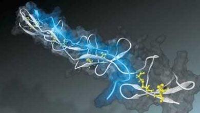 Nanosensor measures tension of tissue fibers