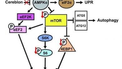 Photo of جداسازی ژن یادگیری بااستفاده از مدل موشی ناتوان ذهنی