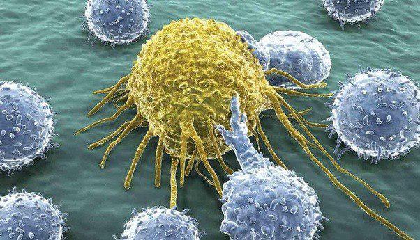 کشف روشی جدید برای تحریک پاسخ ایمنی علیه سلولهای توموری - اخبار زیست فناوری
