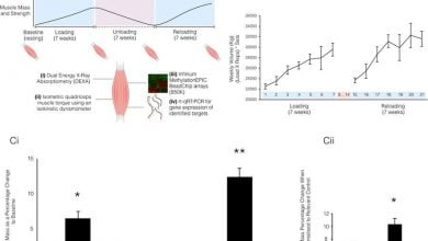 Photo of کشف حافظه ماهیچهای در سطح DNA!