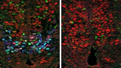کشف ارتباطات ژنتیکی که تشکیل نورونهای حرکتی طی تکامل جنینی را تنظیم میکند-زیست فن