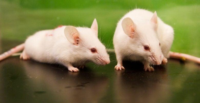 تکنیک ژنتیکی فرایندهای آلزایمر در موشها را تغییر میدهد