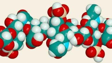 Photo of ترکیبات هپاران سولفات،پس از پرتودهی گاما،ساختار و عملکرد خود را حفظ میکند