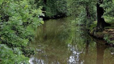 Photo of DNA محیط زیست، شاخصی برای بررسی تنوع گونهای حیوانات رودخانه