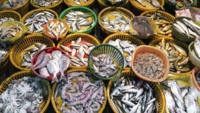 Photo of گزارشی از پیش بینی تولید و مصرف غذاهای دریایی چینی