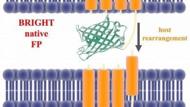 توسعه ی روش های آزمایش بیوسنسورهای فلورسنت قبل از سنتز آنها - اخبار زیست فناوری