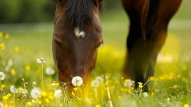 Photo of تشخیص آلرژی در اسب ها با یک تراشه