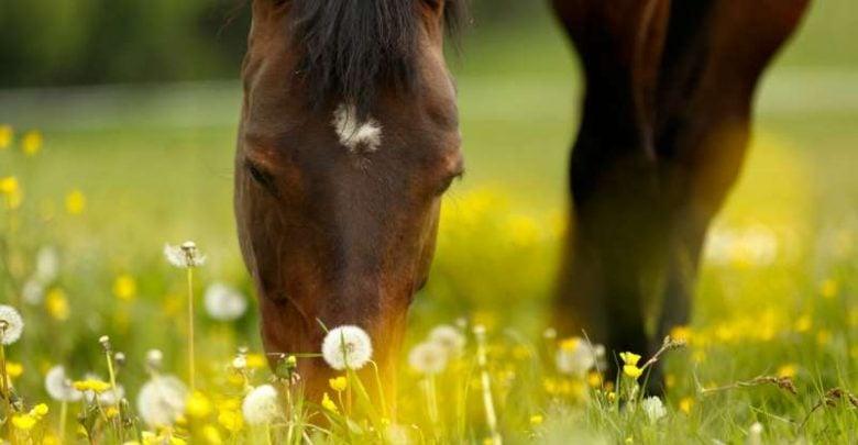 Allergen chip identifies allergies in horses - اخبار زیست فن