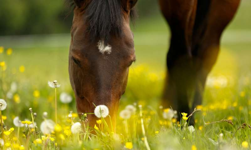Allergen chip identifies allergies in horses - اخبار زیست فن