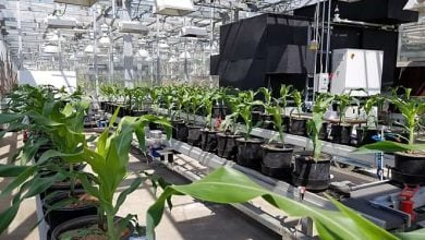 Greenhouse 'conveyer belt' could advance food production, address looming global food crisis - اخبار زیست فن