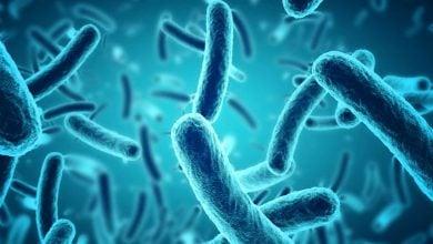 عنوان 'jacket' لقبی برای یک سلول باکتریایی - اخبار زیست فناوری