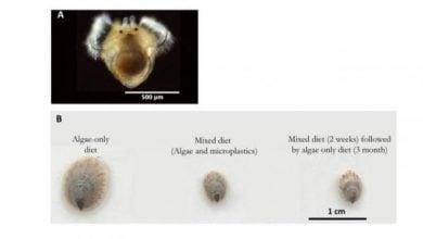 Photo of تاثیر میکرو پلاسمید ها بر موجودات دریایی