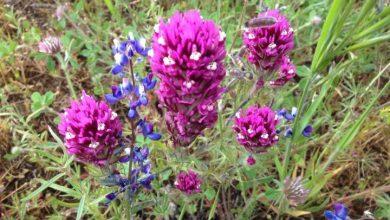 Native wildflowers bank on seeds underground to endure drought - اخبار زیست فن