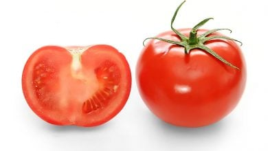 OPEN ACCESS WILD TOMATO GENOME NOW AVAILABLE - اخبار زیست فن