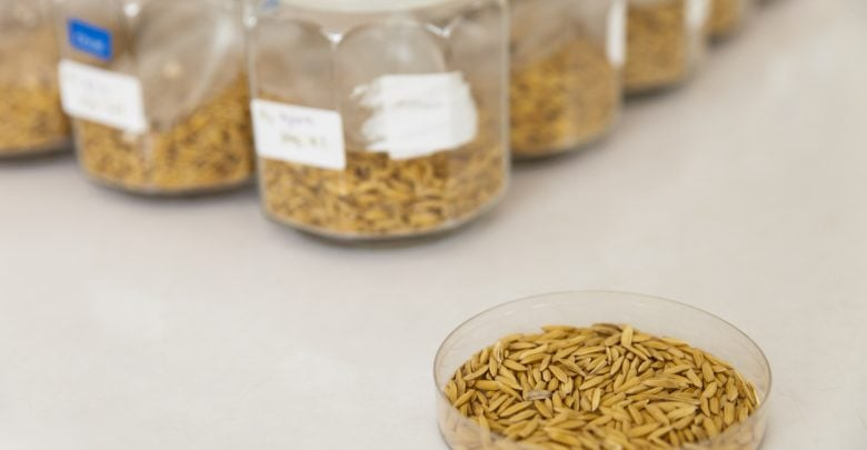 RESEARCHERS DISCOVER GENE FOR SALT STRESS SENSITIVITY IN RICE - اخبار زیست فن