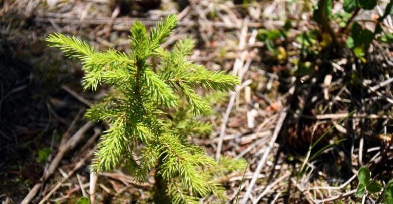 Reforesting US topsoils store massive amounts of carbon, with potential for much more - اخبار زیست فن