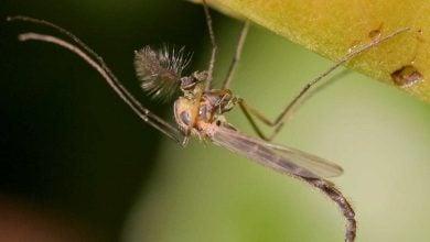 Photo of زنده ماندن حشرات آفریقایی در خشکسالی با خشک شدن
