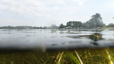 Photo of بهبود اکوسیستم خلیج Chesapeake با پوشش گیاهی آبهای زیرزمینی