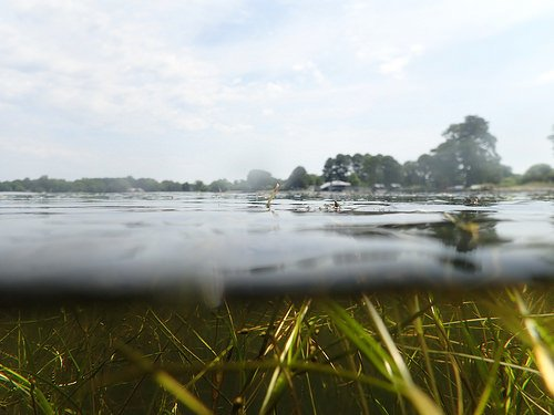 Submerged aquatic vegetation return is sentinel of Chesapeake Bay ecosystem recovery - اخبار زیست فن