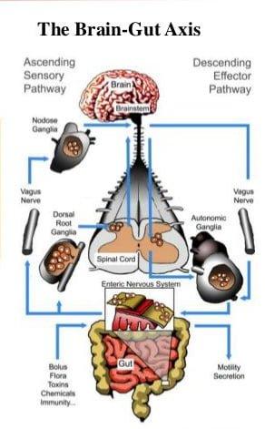 محور میکروبیوتا روده-مغز،مرکز جدید سلامت روانی
