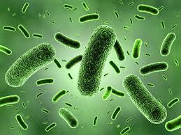 خروج از آب های گرم --آیا DNA سیار علت است ؟ - اخبار زیست فناوری