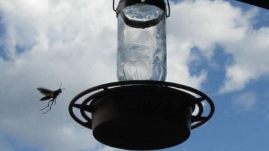 Photo of حشرات،مسیری برای یافتن مخمرهای تجاری جدید