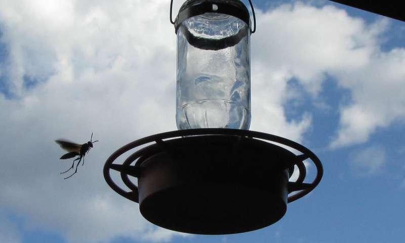 حشرات،مسیری برای یافتن مخمرهای تجاری جدید _ اخبار زیست فناوری