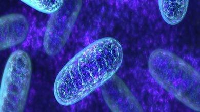 Photo of کشف پروتئین پیامرسان میتوکندری به هسته