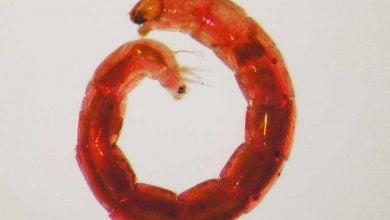 Photo of روش خود خشک سازی عامل بقای حشرات آفریقایی
