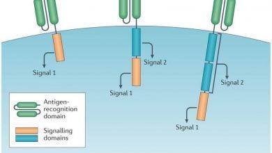 Photo of نتایج مثبت و ماندگار درمان با سلولهای CAR T در بیماران جوان مبتلا به سرطان خون