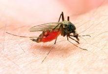 Photo of کشفی بزرگ برای کنترل بیماری مالاریا